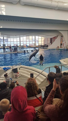Another shot of the dolphin show from the National Aquarium in Maryland, USA.
